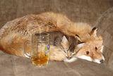 Пило коте... ; comments:13
