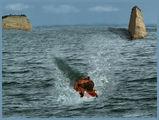 Морска шир ; comments:37