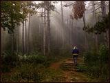 Самотна разходка ; comments:58