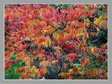 Есенна палитра ; comments:37