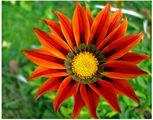 Едно от слънчицата на есента ; comments:46