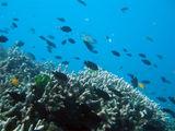 Големия бариерен риф, Австралия ; comments:12