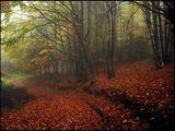 В мъгливата есенна прегръдка ; comments:115