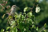 Грижи за гнездото ; comments:15