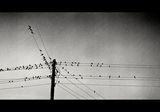 Птици върху жици! ; comments:31