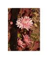 Есенни цветове ; comments:29