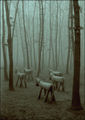 В гората ; comments:44