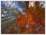Есенна гора ; comments:82
