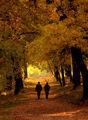 Златна есен ; comments:18