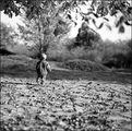Първата есен на малкия Анди ; comments:28