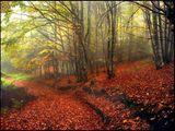 В мъгливата есенна прегръдка.2 ; comments:151