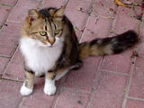 Greece cat ; Comments:3