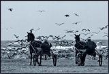 зимни брегове ; comments:98