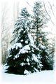 Снежко затрупа всичко навън... ; Comments:5
