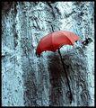 Нарисувах ти дъжд ; comments:30