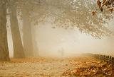 Разходка в един ноемврийски неделен следобед ; comments:57