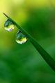 сълзите на тревата ; comments:24