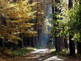 Пътека, пълна с тайни... ; comments:114