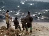 Ловим риба, пък се хващат птици... ?!? ; comments:45