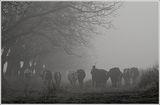 Утрото на един пастир ; comments:44