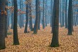 Мъгла, гора и още нещо ... ; comments:90