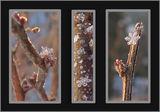 Зимни цветя ; comments:57