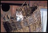 Зимната квартира на едно коте ; comments:16