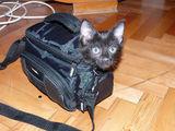 Котка ин дЪ чанта ; comments:15