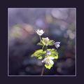 Spring in Violet - 2007 ; comments:24