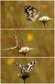 Пеперудесто ; comments:45