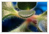 ...малки цветни неща... ; comments:36