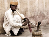 The snake-charmer II ; comments:65
