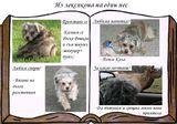 Из лексиконa на един пес ; comments:17