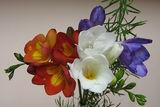 обожавам цветята:))) ; comments:68