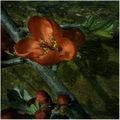 Подранила пролет 3 ; comments:87