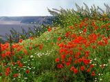 Цветята на ранното лято ; comments:74