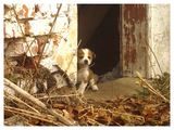 no name ( ID=565122 ) ; comments:19