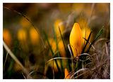 Пролетни пламъчета ; comments:58