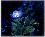 Нощно цвете ; comments:43