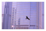 полет в града ; comments:41