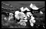 Пролетни сънища ; comments:62