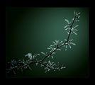 spring melancholy ; comments:63