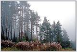 Пак мъгла !!! ; comments:57