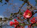 Пролет в червено ; Comments:9