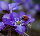 E, пролет е:-)) ; comments:51