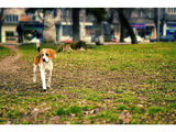 beagle come in peace ; Comments:21