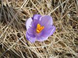 Пролет ; Comments:1