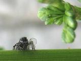 листна въшка за закуска ; Comments:17