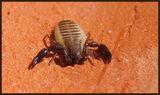 скорпион някакъв /1см/ ; Comments:17