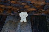 ... да срещнеш мечка във гората ; Comments:2